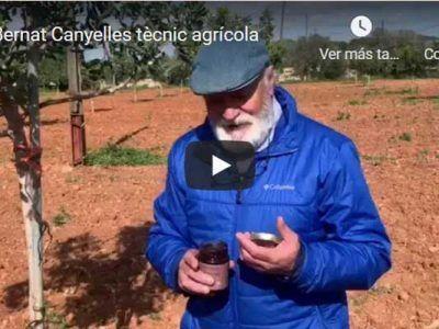 Bernat Canyelles técnico agrícola